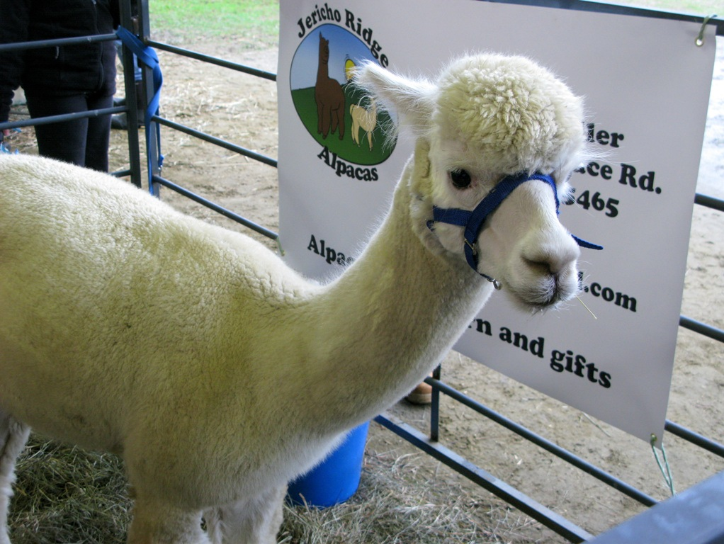 the vermont sheep and wool festival | city sprouts